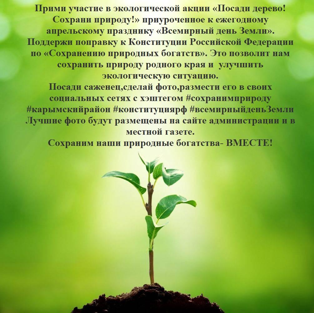 посади дерево текст